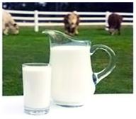 Rich Dairy